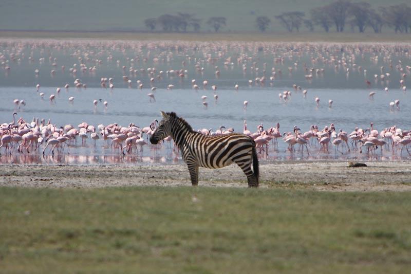 Отдых в Заповеднике Нгоронгоро - элитные отели и туры | Путевки от Yana  Luxury Travel & Concierge