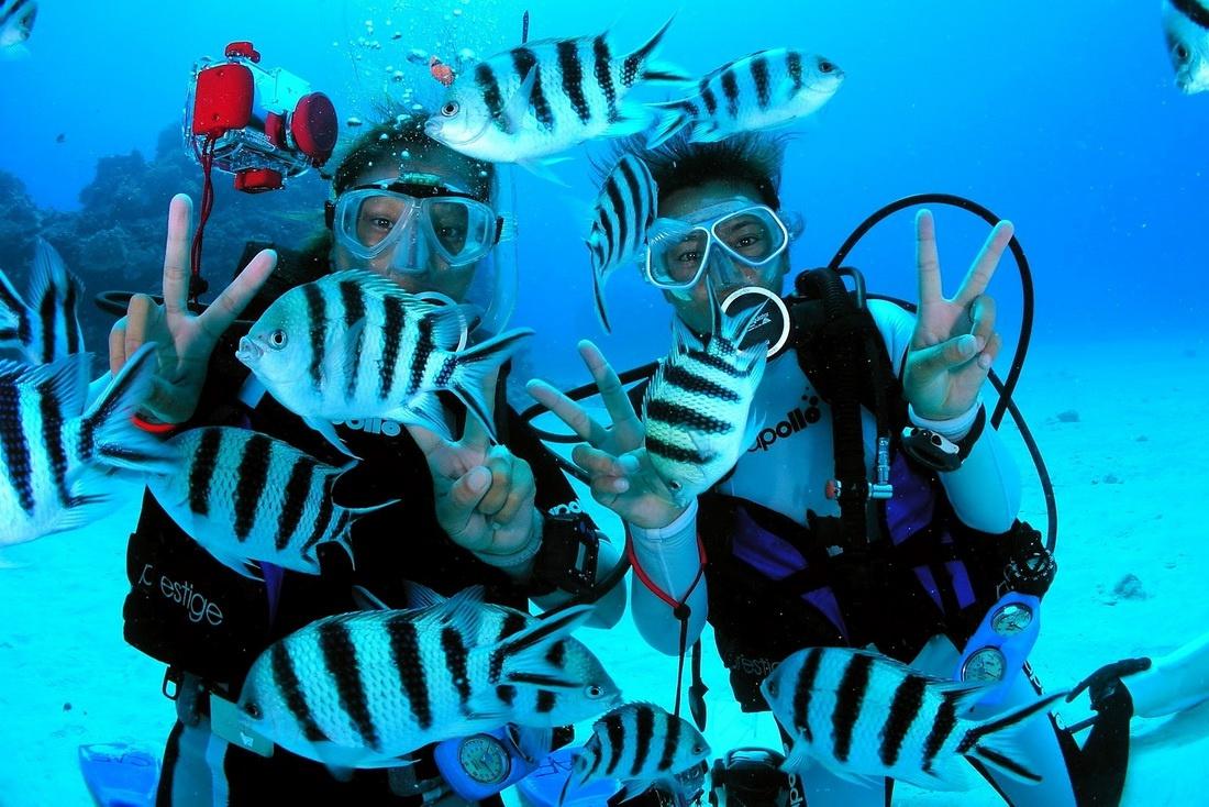 dictcc  scuba diving  Wörterbuch EnglischDeutsch